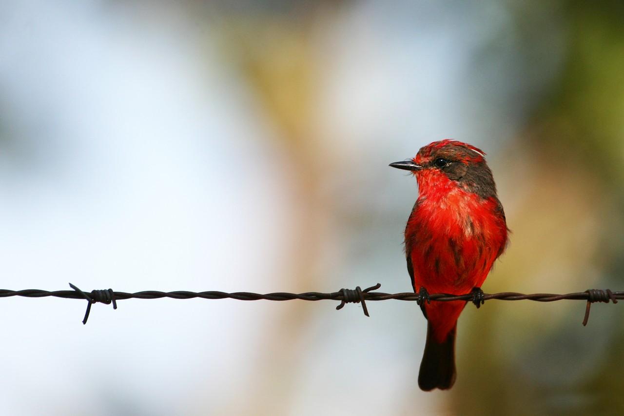 Aves da UnB